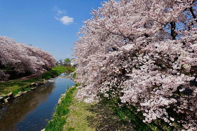 東京 三鷹 野川